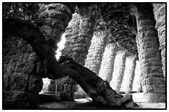 (Herv KERNEIS) Tags: noiretblanc gaudi pierres espagne arbre barcelone voute tronc colonnes parkgell trix400 catalogne silverefexpro2 sonyrx100 voyagesaintlaurent