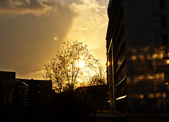 99/365 (kriegundliebe) Tags: city sunset sky urban sun tree architecture gold lights golden sundown burning dsseldorf