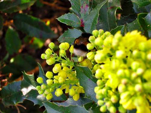 "Blühendes im Garten • <a style=""font-size:0.8em;"" href=""http://www.flickr.com/photos/67776942@N04/13535188763/"" target=""_blank"">View on Flickr</a>"