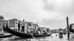 Venetsia_melonta-29.jpg