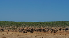 Suedafrika-51 (Lukas P Schmidt) Tags: elephant addo nationalpark elephantpark