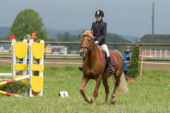 DSC01396_s (AndiP66) Tags: horse sports sport schweiz switzerland sony may luzern mai alpha concours pferd equestrian ch horsejumping wettbewerb 2016 springen f456 ettiswil pferdesport sonyalpha springreiten kantonluzern andreaspeters cantonoflucerne pferdespringen sony70400mm 77m2 sal70400g2 sony70400mmf456gssmii a77ii ilca77m2 77ii 77markii slta77ii 14mai2016