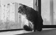 (s.luzin) Tags: bw film cat kodak zuiko olympus35sp