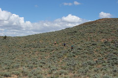 Ants crawling in the sagebrush (rozoneill) Tags: lake oregon river carlton butte desert hiking painted canyon vale trail backpacking saddle blm uplands owyhee honeycombs