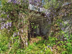 Noodles Grocery Store (BigTonyB) Tags: abandoned nc corinth northcarolina wisteria chathamcounty noodlesgrocerystore