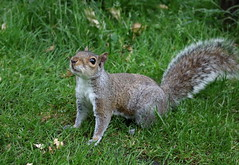 """""""You have the food?"""" (phoebe.horner) Tags: park trees people white black colour tree monochrome fence landscape photography landscapes photo photographer view edited greenwich royal parks fences squirrell cutty sark"""
