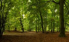 Lennebergwald (waldland) Tags: buche gonsenheim laub laubwald