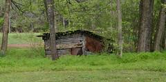 Pig House (BKHagar *Kim*) Tags: house green nature grass metal tin pig woods rust outdoor rusty structure bkhagar