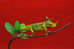 Jackson's Chameleon - Robert J. Lang (P. Colman) Tags: origami paper reptile lizard chameleon sd1merrill