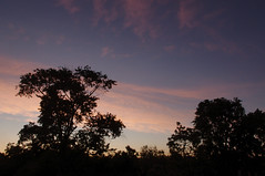"""June Morning Sky • <a style=""""font-size:0.8em;"""" href=""""http://www.flickr.com/photos/26989598@N08/27813363206/"""" target=""""_blank"""">View on Flickr</a>"""