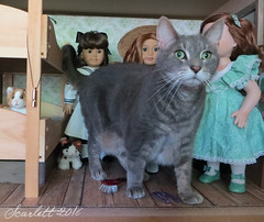 This Photoshoot Needs More Maggie! (scarlett1854) Tags: americangirl ag americangirldoll samantha victorian edwardian 1904 lake pineypoint doll dollcollection pleasantcompany mattel cabin sailor dress cat photobomb