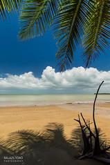 Under The Palm Tree (torobala) Tags: blue sky beach sand nikon palm trinidad nikond3200