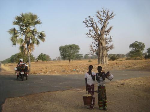 Baobab and girls