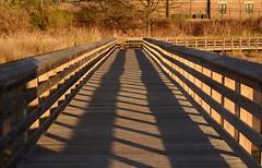 Shadows in the Sunset (McDuck17) Tags: park bridge sunset sun shadows nj walkway wetlands bayonne autofocus rutkowskipark mygearandme mygearandmepremium mygearandmebronze mygearandmesilver mygearandmegold mygearandmeplatinum mygearandmediamond ringexcellence blinkagain dblringexcellence tplringexcellence bestofblinkwinners eltringexcellence
