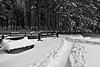 Twin Lakes Snow (Brandon Lee Dittsworth) Tags: canoneos1000d canonefs1022mm brandonleedittsworth greensburg pennsylvania twinlakespark black white winter2010