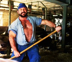im kuhstall - in the cow-stable (Farmerbaer) Tags: beefy burly buff bearded muscled melker emmentaler hairychested stocky stallarbeit swissfarmer schweizerbauer melkerbluse brawnyfarmer schwingertyp