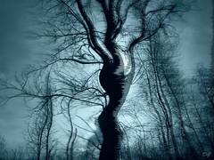 La danse des arbres. The dance of trees (Amiela40) Tags: tree vent dance movement wind danse magical arbre mouvement hypothetical magique artdigital contemporaryartsociety photoquebec bestcapturesaoi elitegalleryaoi whaticallart netartii