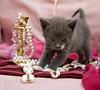 20110725_19655b (Fantasyfan.) Tags: pink pet cute animal topv111 furry posing fluffy classy fantasyfanin bearls unohdus highqualityanimals siirretty