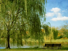 Monday bench (NataThe3) Tags: park trees summer tree nature leaves bench leaf waterscape thegalaxy
