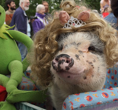 Miss Piggy (R. Drozda) Tags: alaska muppets parade poppy 4thofjuly independenceday ester misspiggy drozda drolsondvm