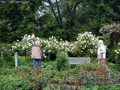 Rozentuin / Rose garden (dietmut) Tags: flowers germany deutschland hamburg botanicalgarden rosegarden planten bloemen sonycybershot 2012 duitsland plantenundblomen rozentuin botanischetuin sonydsct200 dietmut junijune