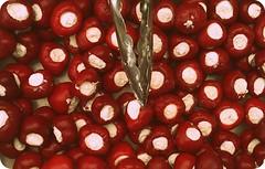 Plněné papričky s čerstvým sýrem (kozusnik.eu) Tags: food 2012 jídlo