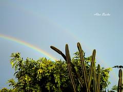 Natureza Singela (Alan Bailão ⎝⏠⏝⏠⎠) Tags: verde brasil arcoiris céu goiânia goiás flôres
