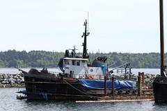 Ocean Clipper At Campbell River (rog45) Tags: canada canon bc 7d tugboat tug tugs 18200 campbellriver rog45 oceanclipper
