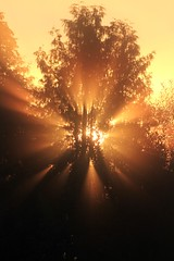 the first rays of the day (Wackelaugen) Tags: sun color tree nature beautiful fog sunrise germany photography eos gold photo europe day ray rays 500d warmbronn