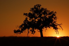 Burnt Orange Sunset (ernogy) Tags: california sunset sky orange tree silhouette northerncalifornia landscape photography oak folsom sunburst prairie ernogy