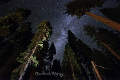 To The Stars (Chase Schiefer) Tags: california nature nikon parks merced astrophotography yosemite dome half halfdome yosemitenationalpark nationalparks mariposa tog starrynight mercedriver togs milkyway d90 atars chaseschieferphotography