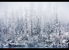 When the Snow Falls (Steve-P2010) Tags: winter snow tree fog forest canon mono snowy foggy peaceful pines slovakia snowfall tatry tatras snowcovered tatra hightatra hightatras steveprice strbskepleso treesinmist