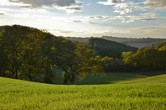 Untitled (Tinina67) Tags: trees light france green landscape evening abend licht mood tina oaks landschaft wald baum stimmung eiche gers tinina67