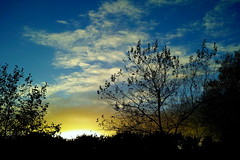 And Now the Leaves Suddenly Lose Strength. (elam2010) Tags: blue trees sunset sky silhouette clouds wirral photomix easthamwoods mygearandme bestevercompetitiongroup sigmadp2merrill