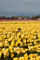 Tulip Fest (6 of 26) (evan.chakroff) Tags: flowers festival washington spring unitedstates tulips tulip april mountvernon tulipfestival mtvernon roozengaarde 2016
