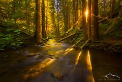 Enchanted Forest (Sairam Sundaresan) Tags: shadow green nature water colors oregon forest canon landscape washington glow shapes wideangle foliage pacificnorthwest starburst sunstar sairam sundaresan marcadamus canon5dmarkiii sairamsundaresan