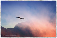 IMG_3879_edit (cnajhar) Tags: sky mountain clouds landscape outdoor seagull