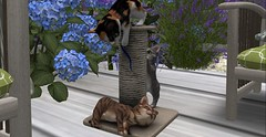 Kitties (Enya T) Tags: playing home secondlife kitties roomies enya scratchingpost
