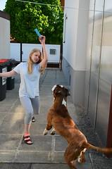 Mngud (anuwintschalek) Tags: dog home garden austria spring may hund paula gordon boxer garten niedersterreich frhling kodu aed bokser kevad 2016 wienerneustadt lapsed koer d7k nikond7000 18140vr