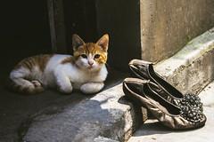 Kitty (Yiqian_Fan) Tags: china digital cat canon shanghai kitty hongkou canon500d