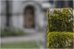 Mid Calder Kirk Moss (Jistfoties) Tags: closeup moss gravestone canon24105f4 midcalder midcalderkirk