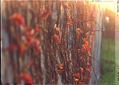 Tangled (shutterbugg011) Tags: light leaves vines glow sunbeams tangled