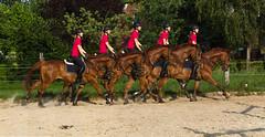 Gallopp-Studie (ribehrend) Tags: lette pferde nordrheinwestfalen oelde gallop kreiswarendorf deutschland orte natur fellfarbe sugetiere fuchs tiere gangart de
