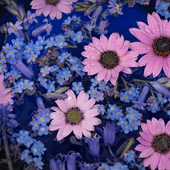 bluebells and daisies (photoart33) Tags: pink blue stilllife bluebells droplets pattern forgetmenots africandaisies