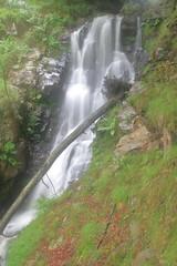 Parque natural de #Gorbeia #Orozko #DePaseoConLarri #Flickr -122 (Jose Asensio Larrinaga (Larri) Larri1276) Tags: 2016 parquenatural gorbeia naturaleza bizkaia orozko euskalherria basquecountry