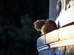 Street cat 150 (Yalitas) Tags: pet cats cat canon kat feline chat kitty gato felino katze katzen kot kedi kass gatta streetcat kotka  kocka  katte  katzchen kottur