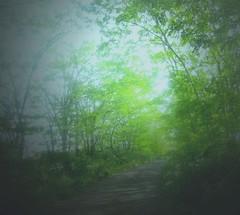 luce (francescabonucci) Tags: verde alberi natura sentiero luce cammino