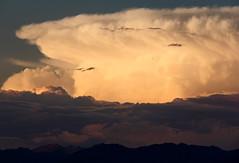 Cumulonimbus cloud rising above the Rockies (windyhill623) Tags: sunset summer sky cloud mountain storm wow skyscape outdoor beautifullight 100v10f cumulus rockymountains cloudscape stormcloud stormlight cumulonimbuscloud cloudsstormssunsetssunrises