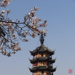 Frhling! (sring77) Tags: china blte frhling  changzhou duft     wenbipagode