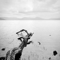 Wallis Lake - Booti Booti NP - NSW (Aurelien VIVIER) Tags: blackandwhite bw lake tree square nikon noiretblanc lac australia nb arbre carré australie wallislake d90 bootibooti 1685mmf3556 aurelienvivier